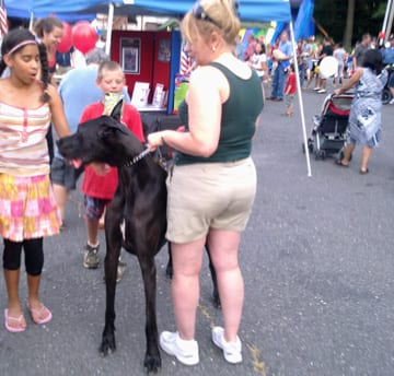 Hightstown Great Dane