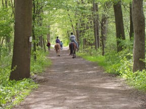 Horses, Institute for Advanced Study Woods
