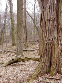 West Windsor Woods