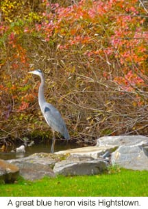 Hightstown Heron