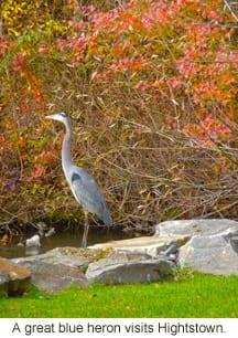 Hightstown Heron