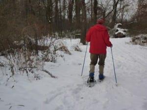 Institute Woods in winter