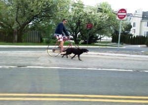 Pt Beach Cyclist w Dog wrong way shoulder